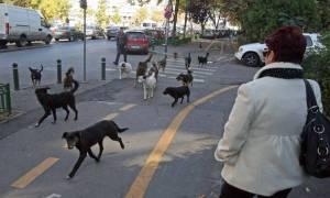 Sursă foto: www.ziare.com