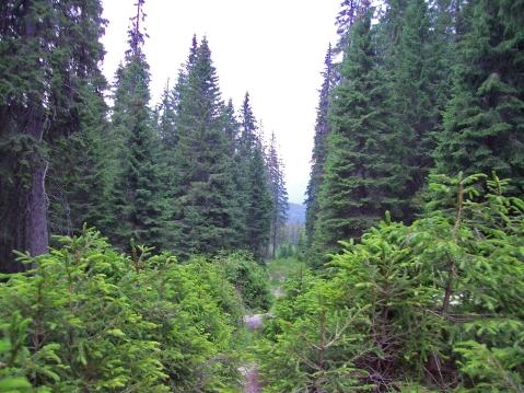 traseu spre lacul Câlcescu munţii Parâng