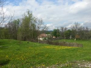 Pastele 2014  - iarba verde de acasa